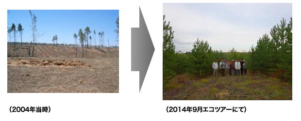 2004年植林地